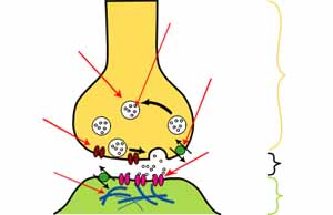 Synapse Illustration.