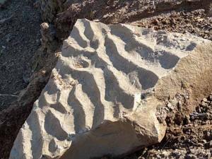 Ископаемые знаки ряби в песчанике.