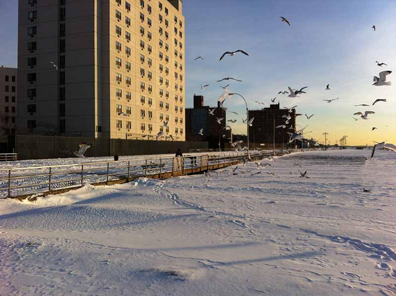 Снежный буран добрался до Нью-Йорка. С Юга!